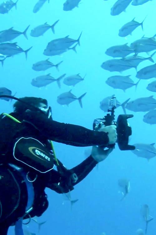 Encounter at Ribbon Reef