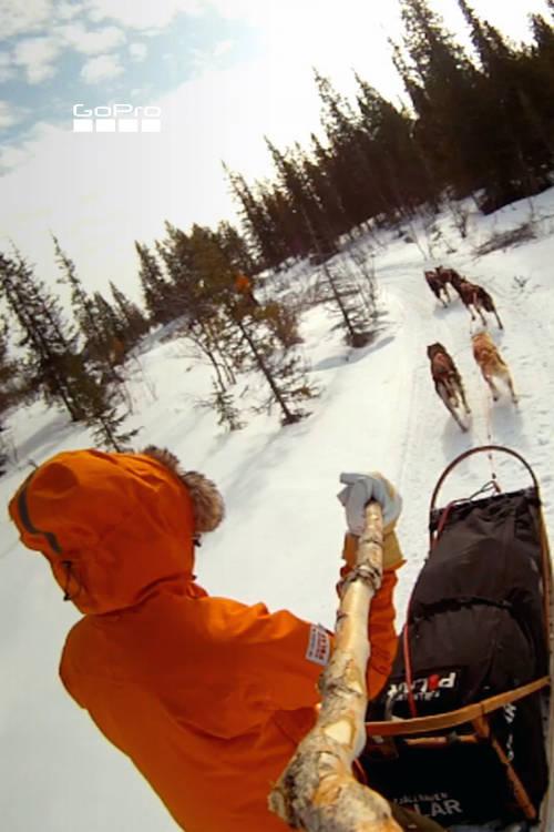 Arctic Dogsled